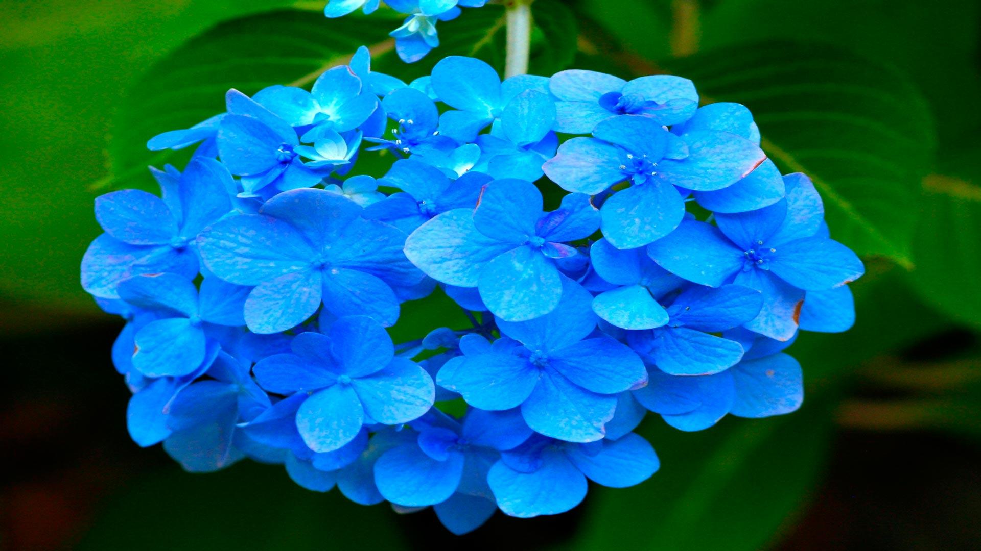 Que plantar en mi jardín según el clima (La luz)