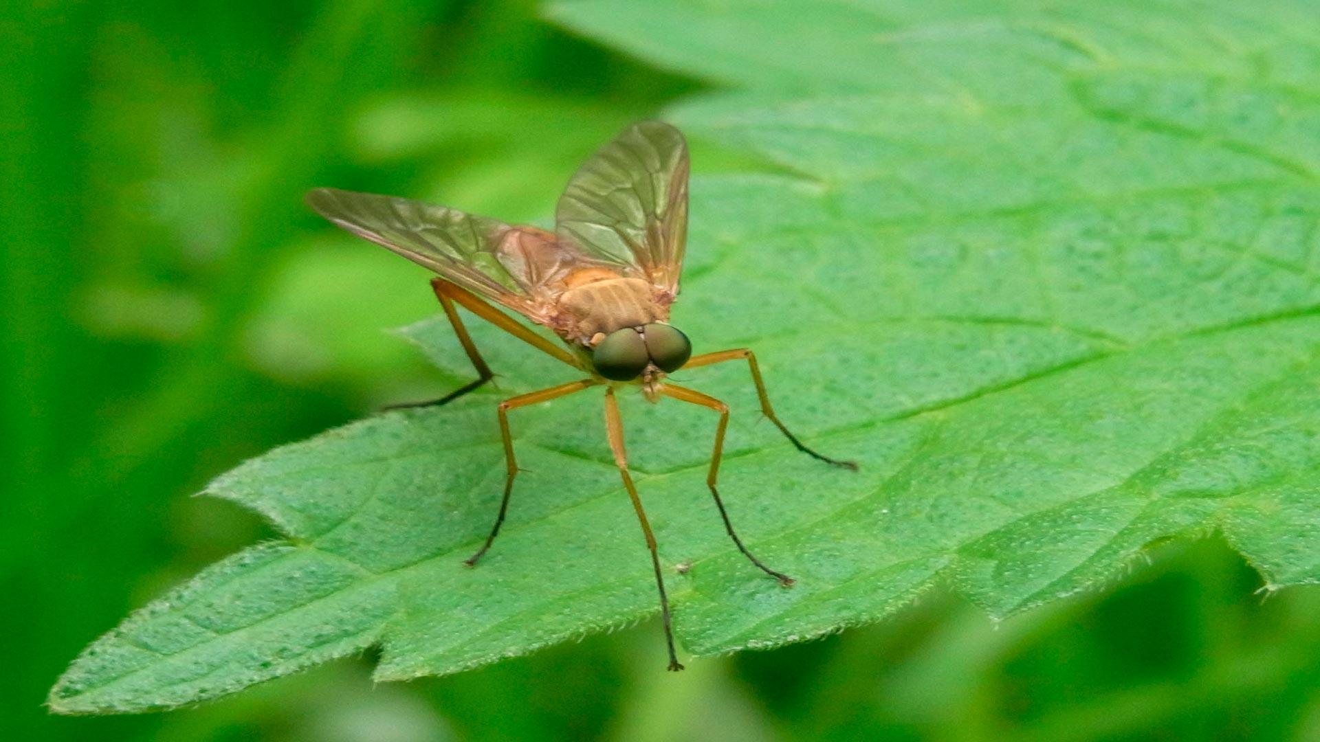 Sabes c mo deshacerte de los inc modos mosquitos del for Como eliminar los mosquitos del jardin