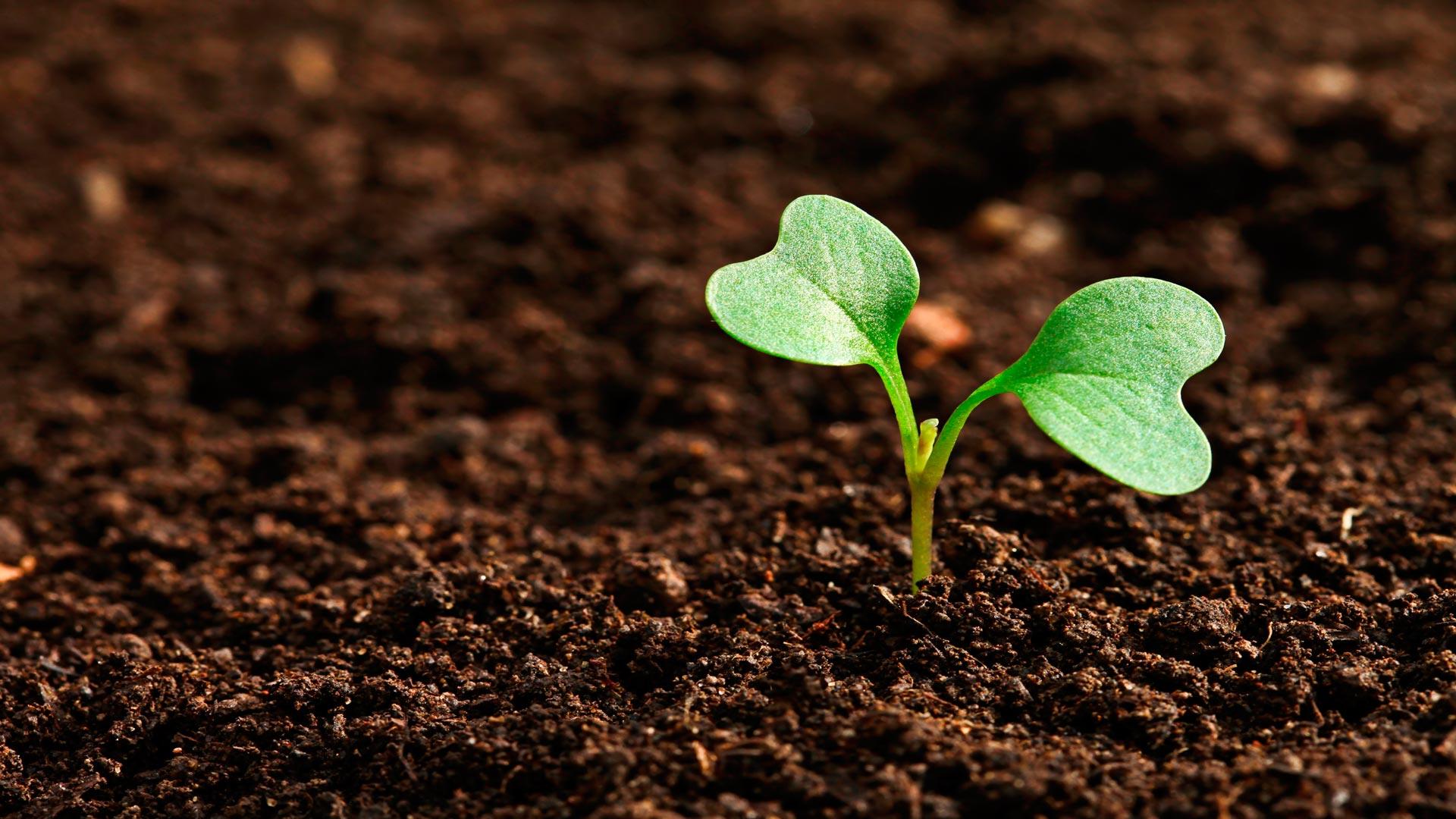 Jornada sobre las Líneas de Ayudas y Apoyos Públicos para el sector agrario