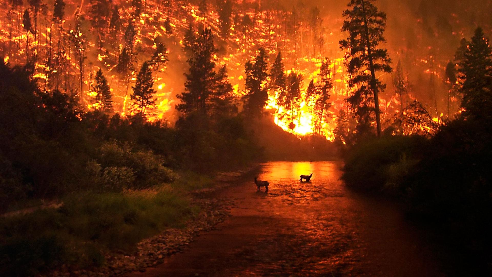 Una terrible amenaza para los bosques