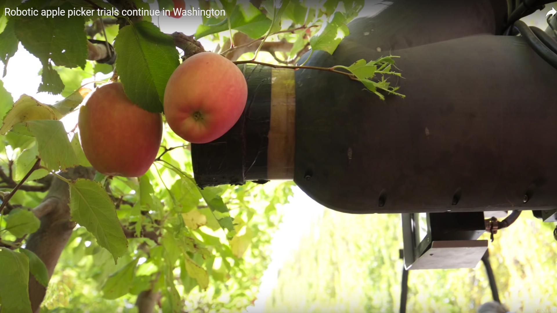 Un robot que recoge manzanas al ritmo de decenas de seres humano