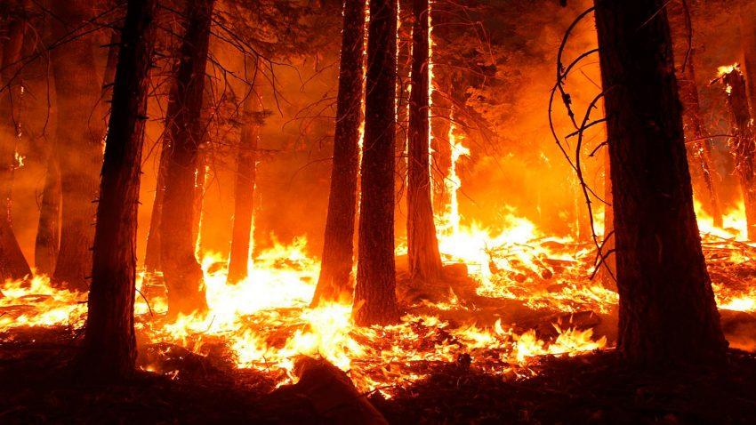 Prohibidas las quemas agrícolas y forestales