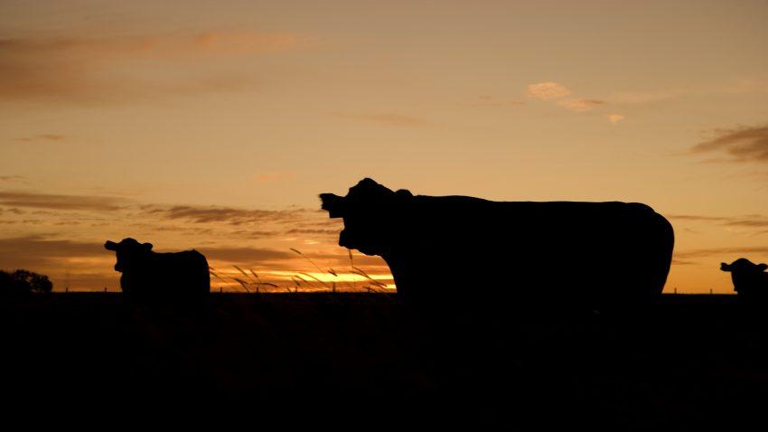 el 30 de las sanciones de la cadena alimentaria son para la industria láctea1920