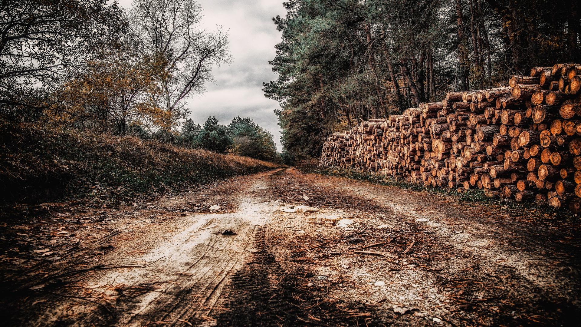 278 millones de euros genero la madera a los propietarios forestales gallegos.1920