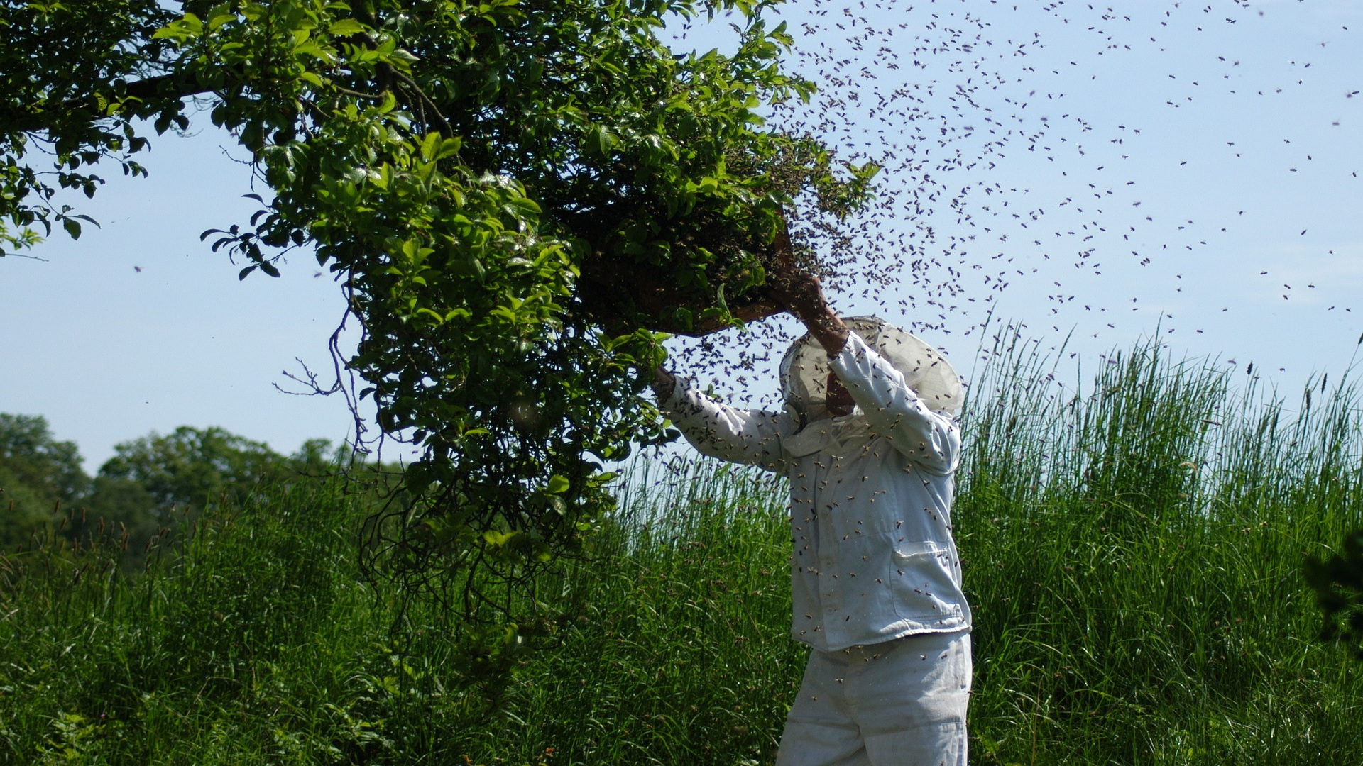 Ayudas para el sector apicola1920