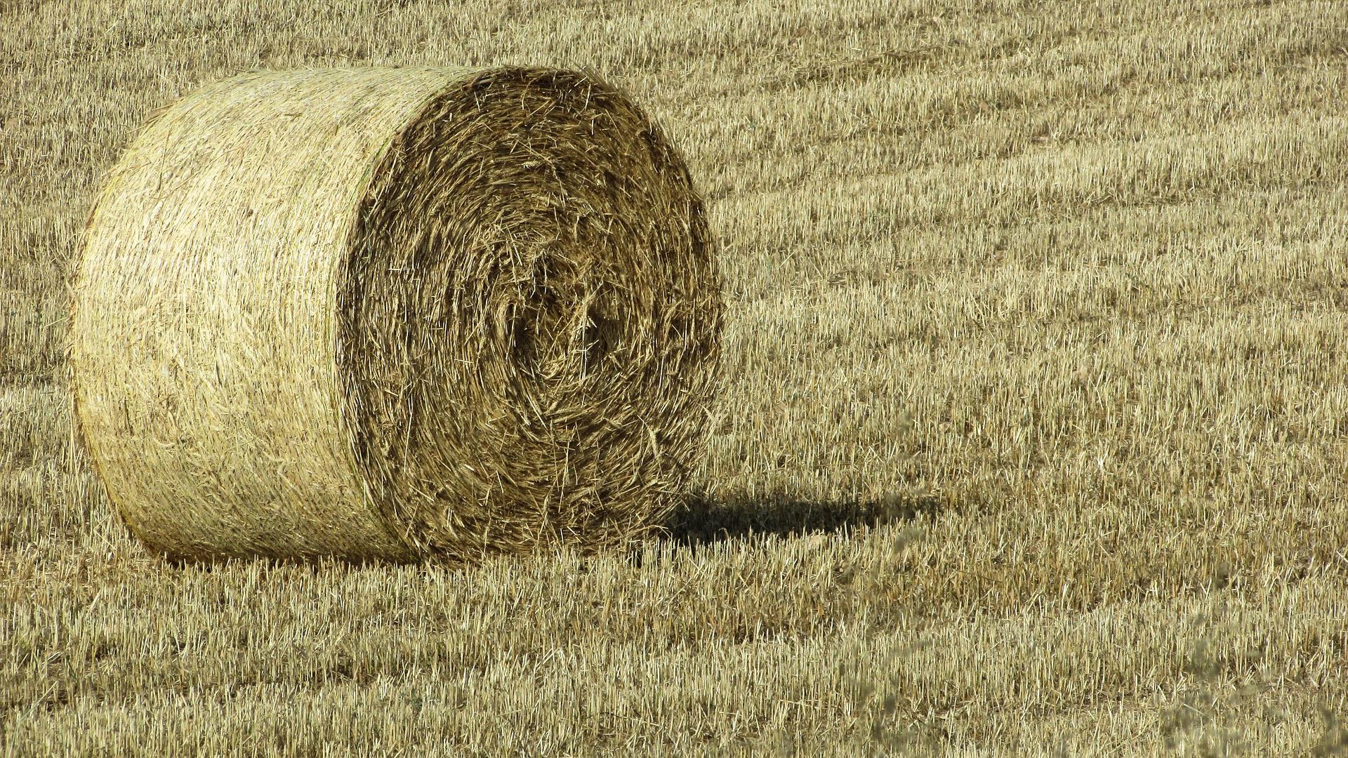 Recomendaciones para conseguir un buen forraje de hierba 1920