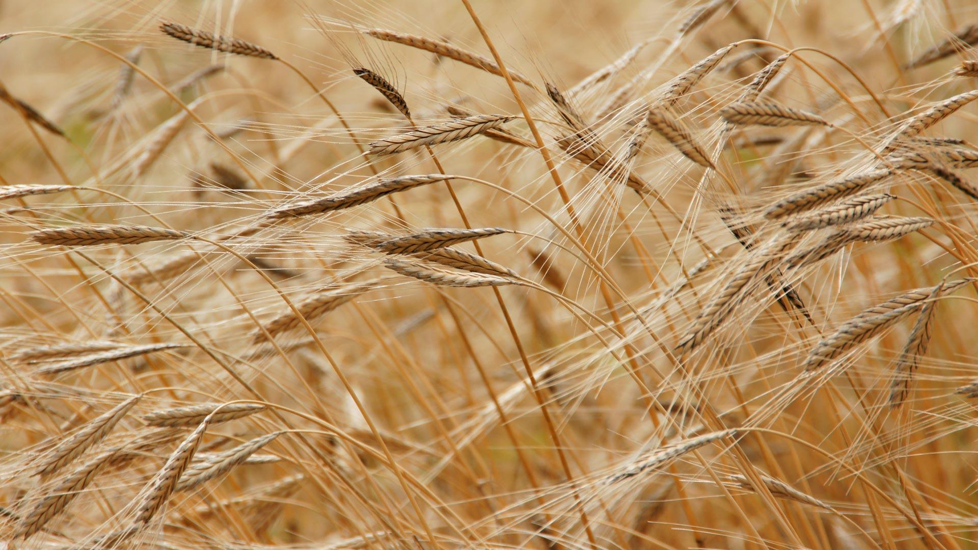 agricultura intelitegente