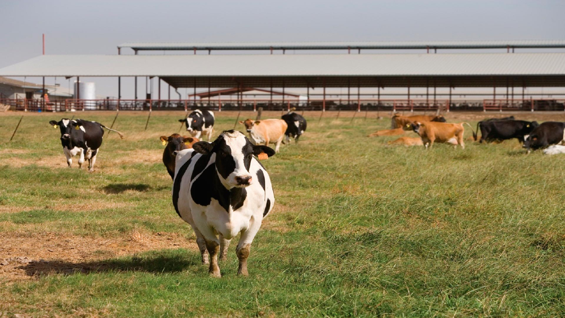 Primera reunión de la Consellería para impulsar un plan de fortalecimiento del sector lácteo