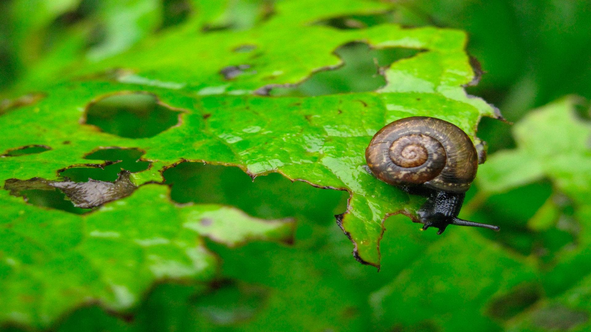 prevenir las plagas de nuestro huerto