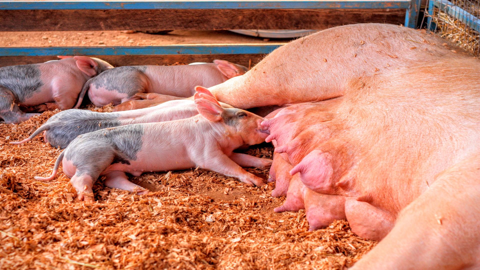 rebaja de los módulos del irpf a las granjas avicolas y porcinas