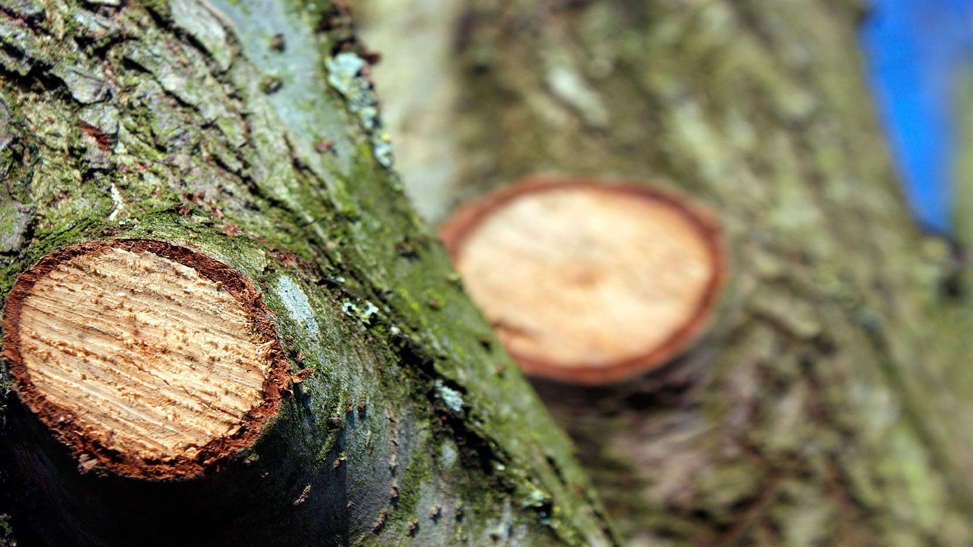 Ayudas para desbroces podas y tratamientos silvicolas