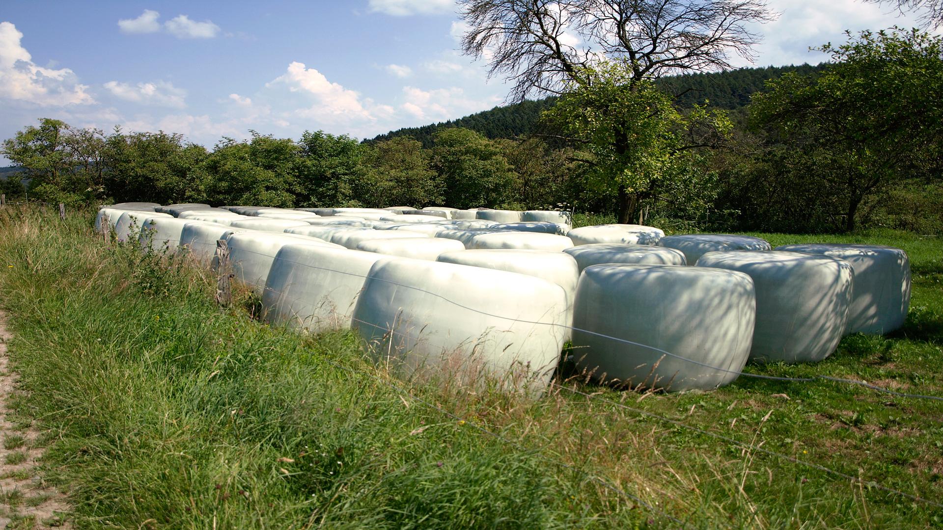 Como reducir las micotoxinas en los silos
