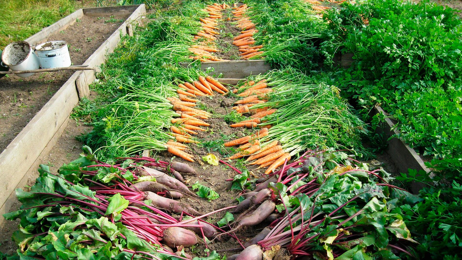 Las industrias agroalimentarias invertirán 128 millones en el campo gallego