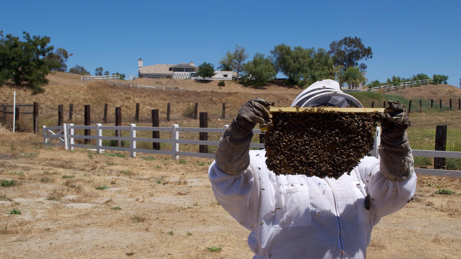 Ayudas para el sector apícola
