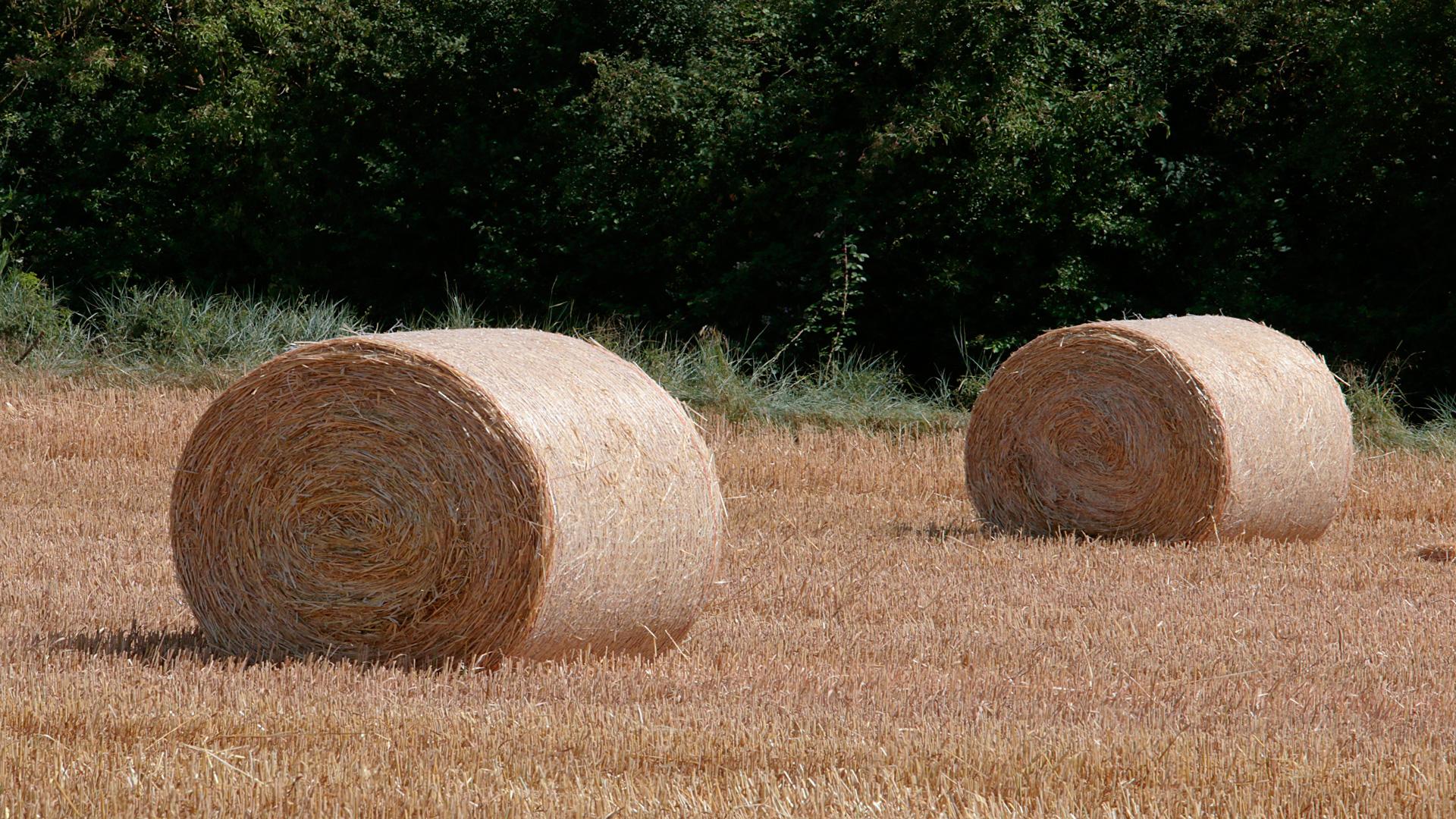 El secreto para la rentabilidad de una ganadería es el buen manejo