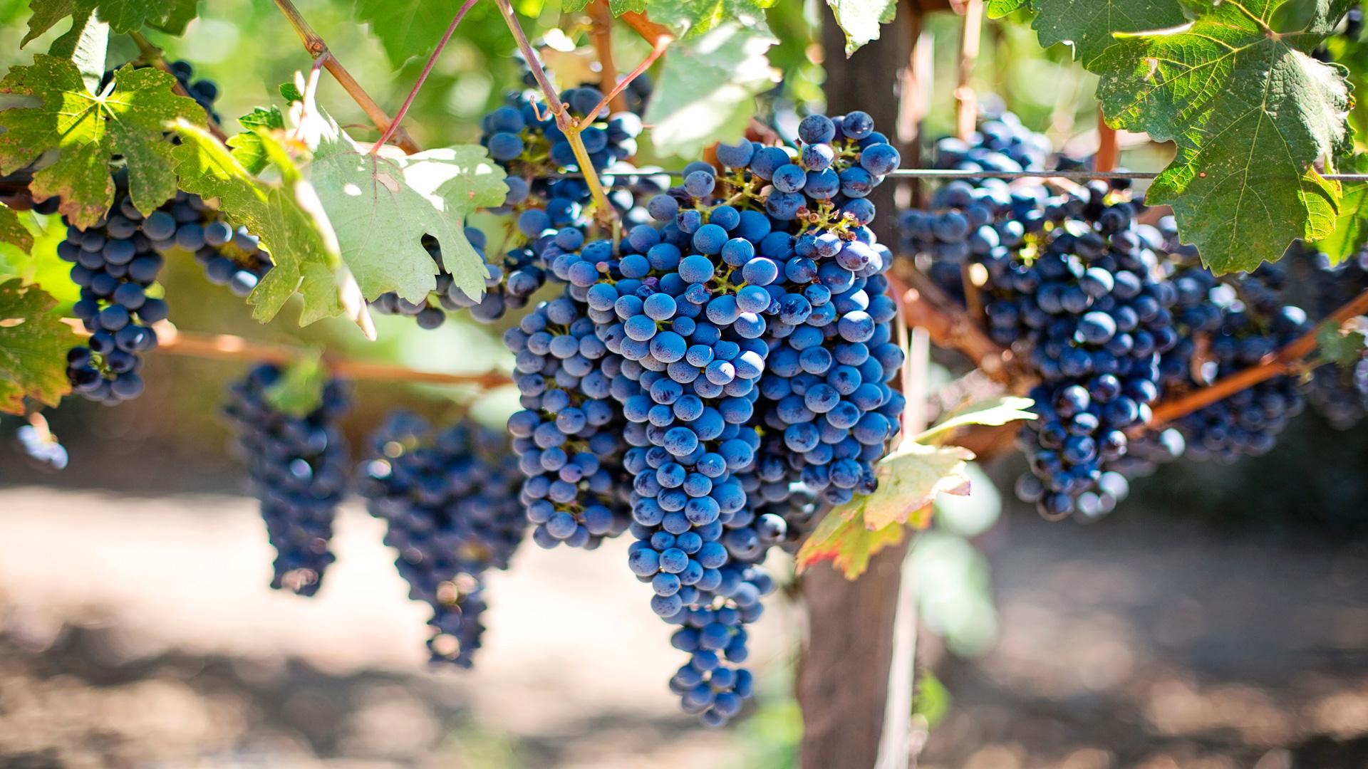 Jornada sobre Prevención de riesgos laborales en el sector vitivinícola