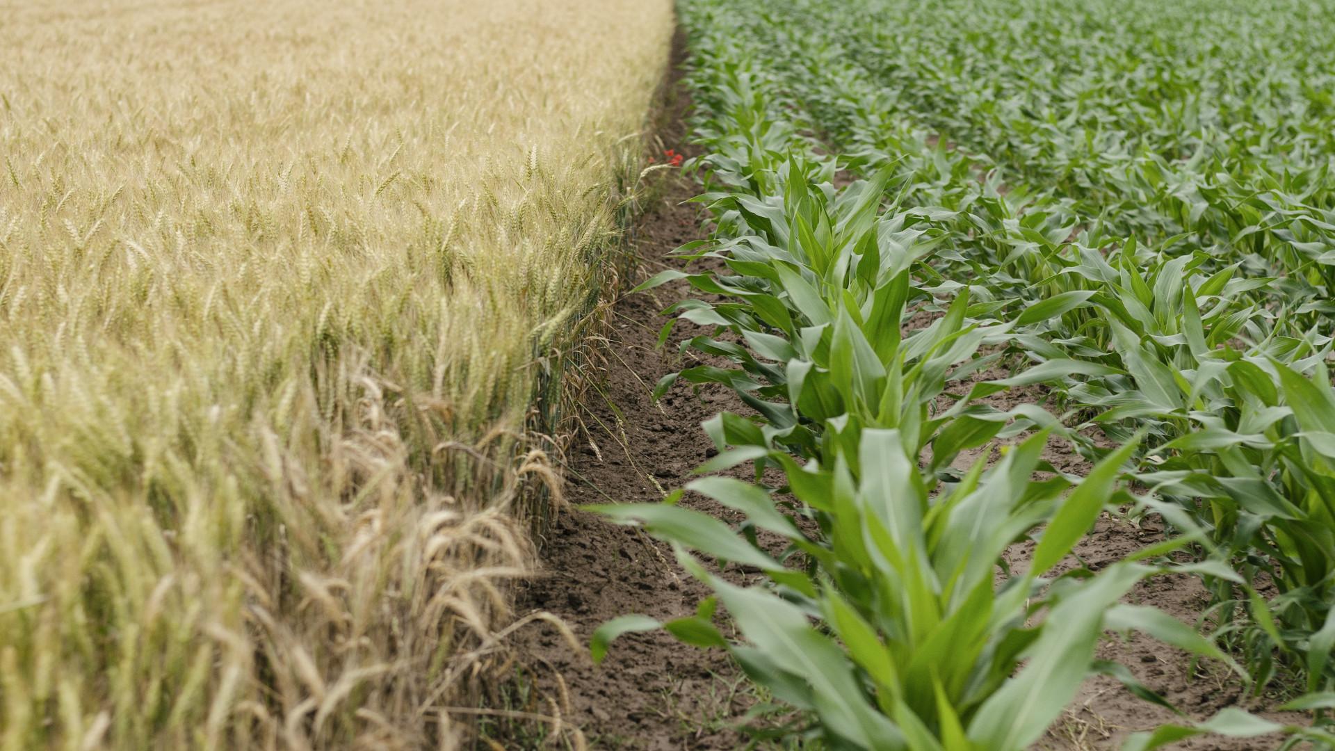 Ayudas para el apoyo a las inversiones agrícolas para la creación de empresas