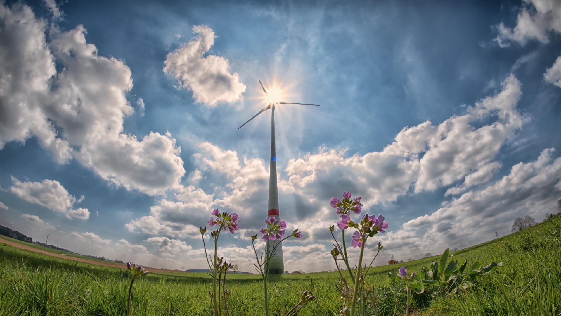 Ayudas para proyectos de energías renovables en el sector primario