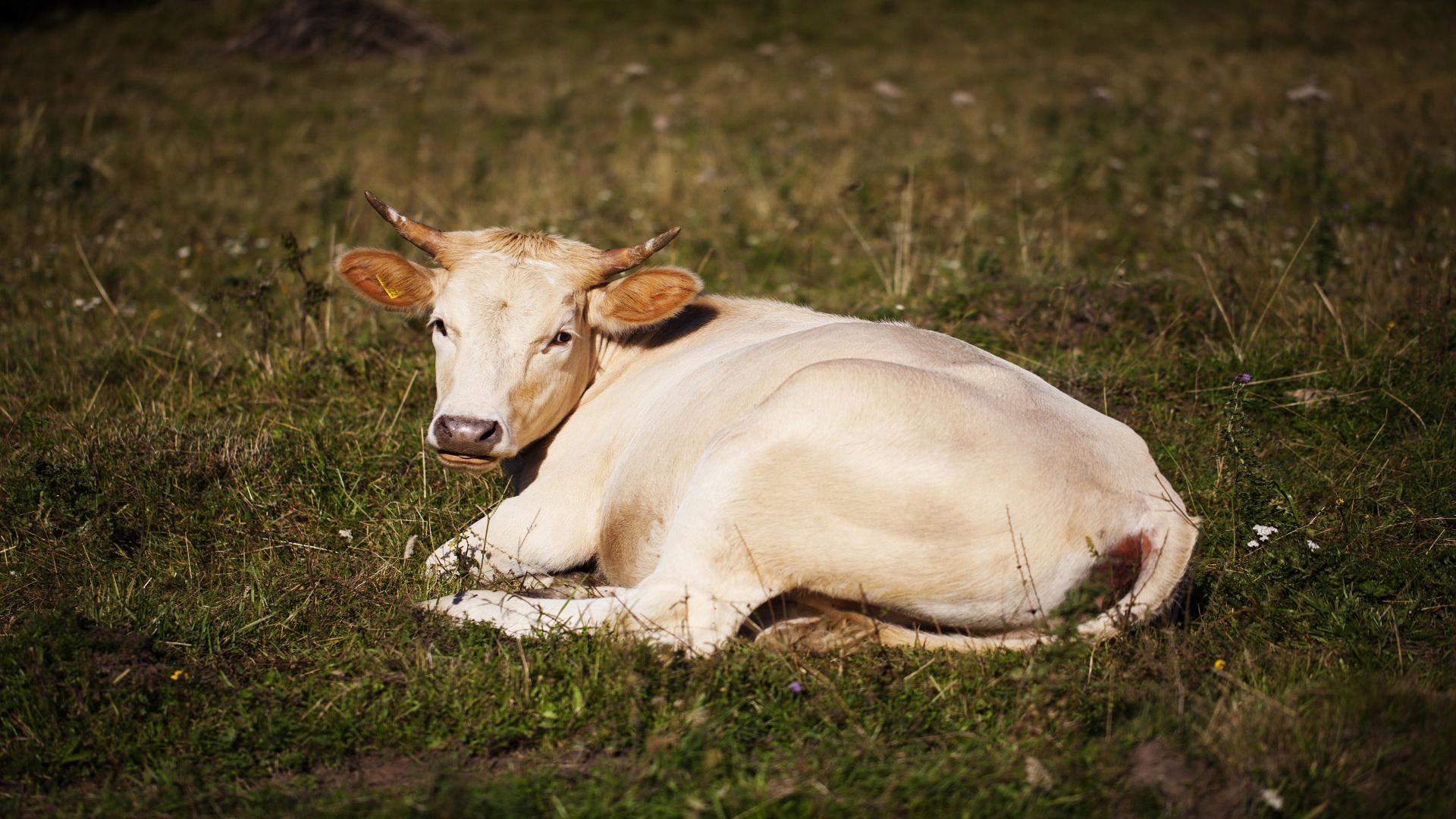 Encuesta a los ganaderos
