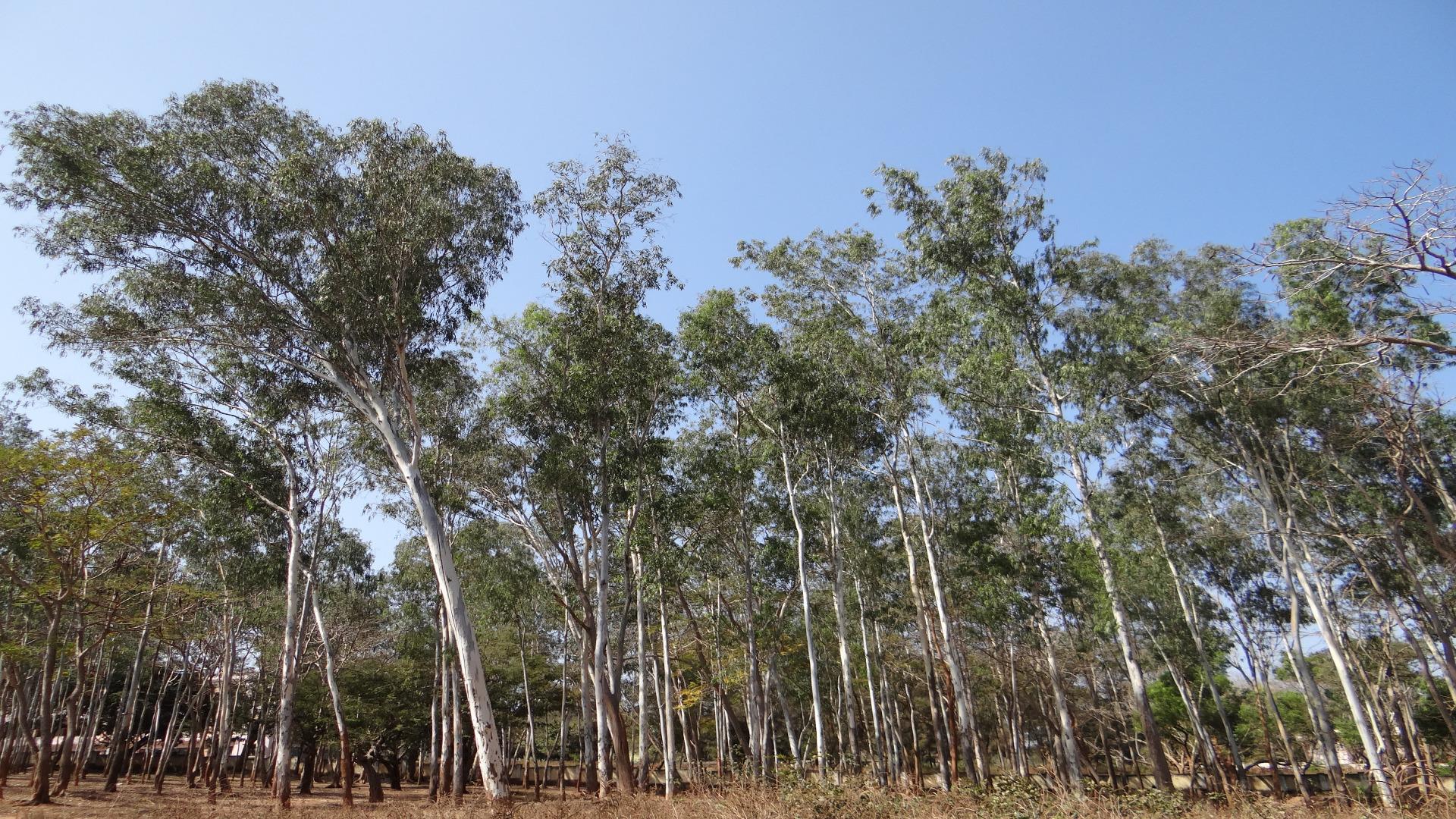 Qué significa los sellos de certificación forestal FSC o PEFC