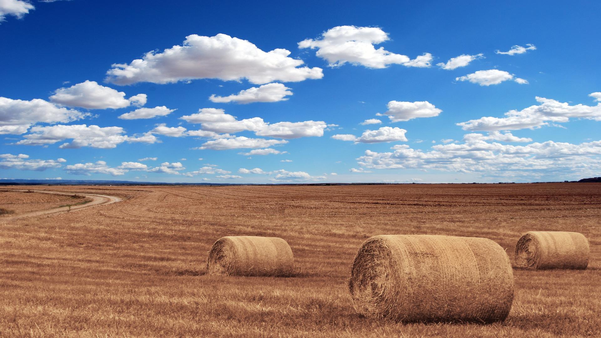 Beneficiarios de las ayudas para la utilización de maquinaria agrícola en régimen asociativo