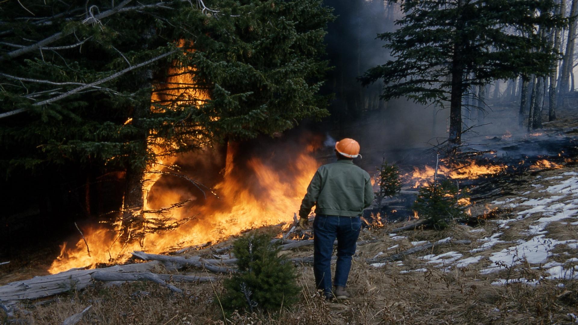Cuál es la distancia a la que debemos limpiar para prevenir los incendios forestales