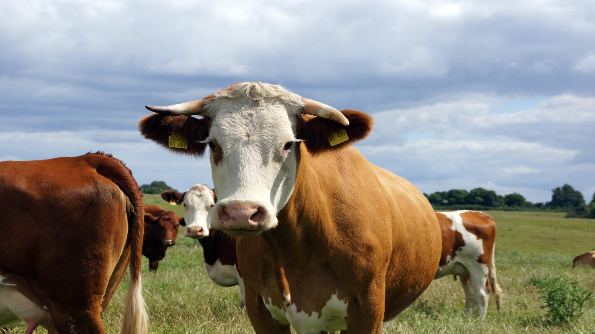 Unións Agrarias denuncia la persecución que sufren los productores que hicieron cesiones de derechos de la PAC1920