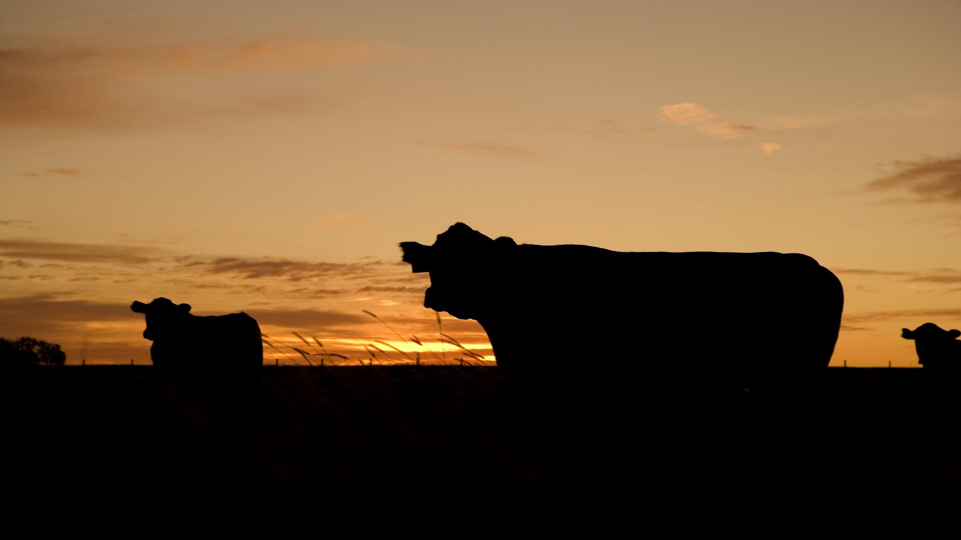 el 30 de las sanciones de la cadena alimentaria son para la industria láctea
