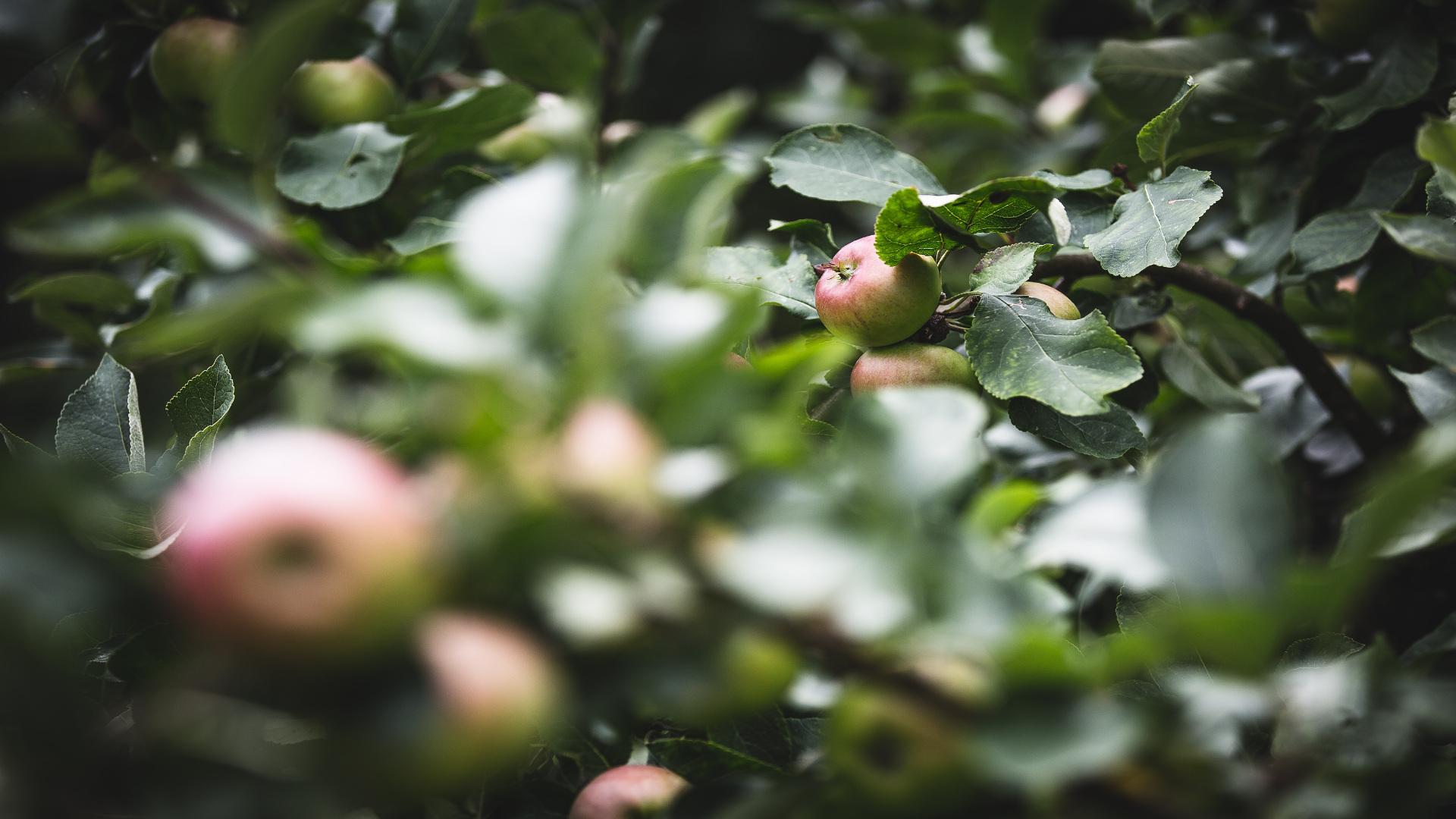En las superficies de interés ecológico no se podrá utiliza herbicidas o fitosanitarios.