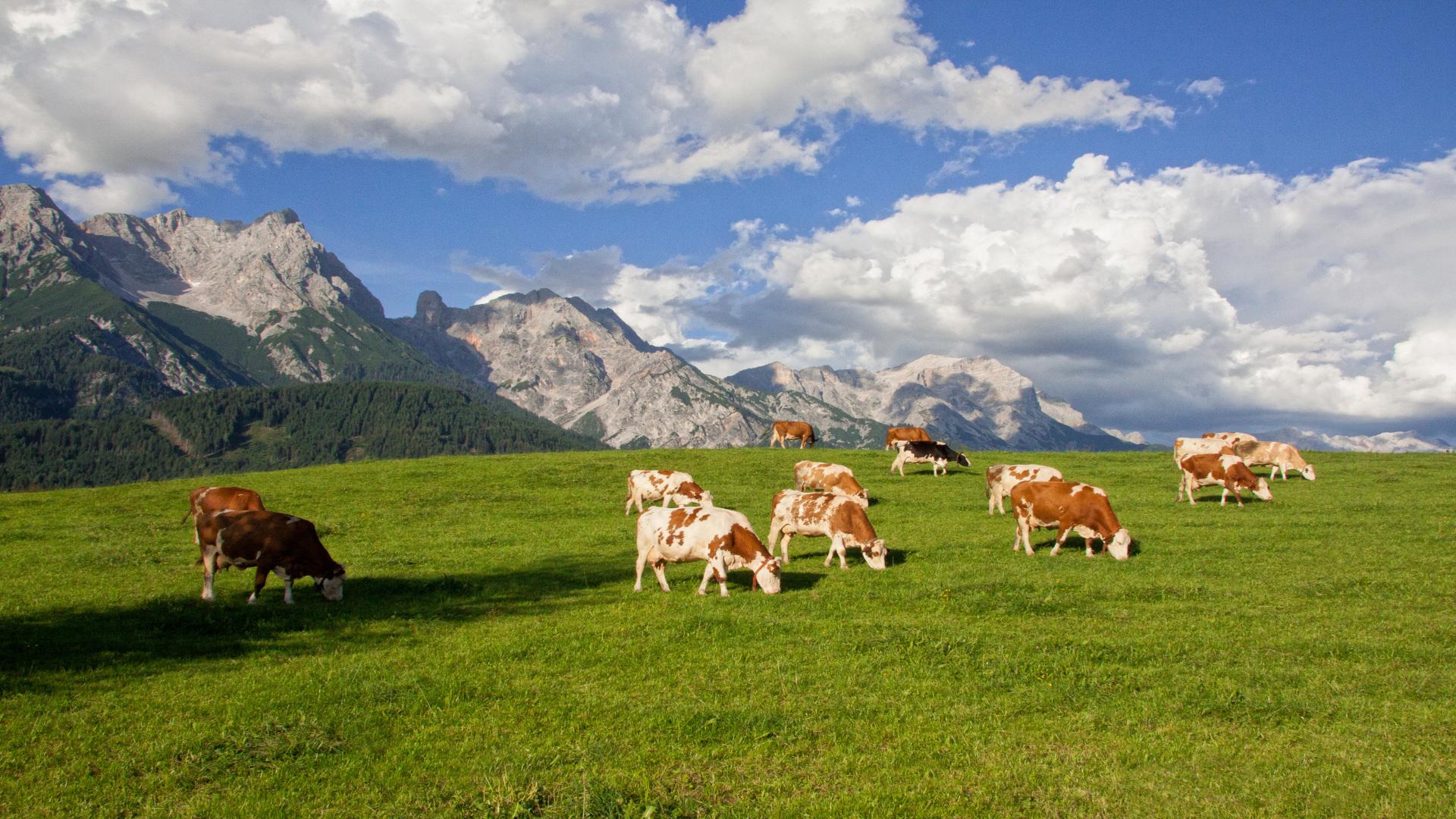 Para el 2018 la leche de pastoreo.