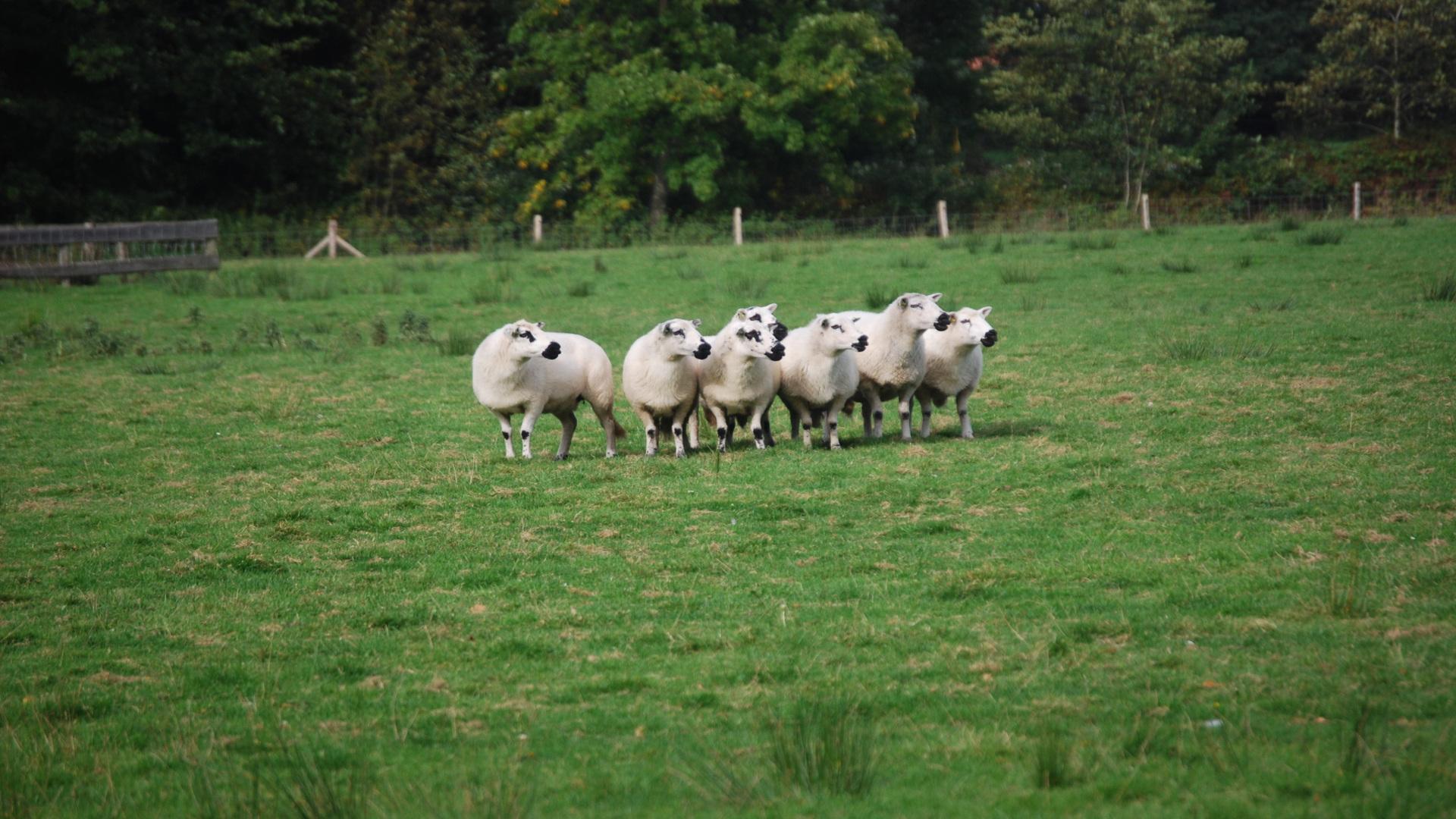 Este sábado hay una jornada sobre comercialización y cooperativismo de ovino y caprino.1920