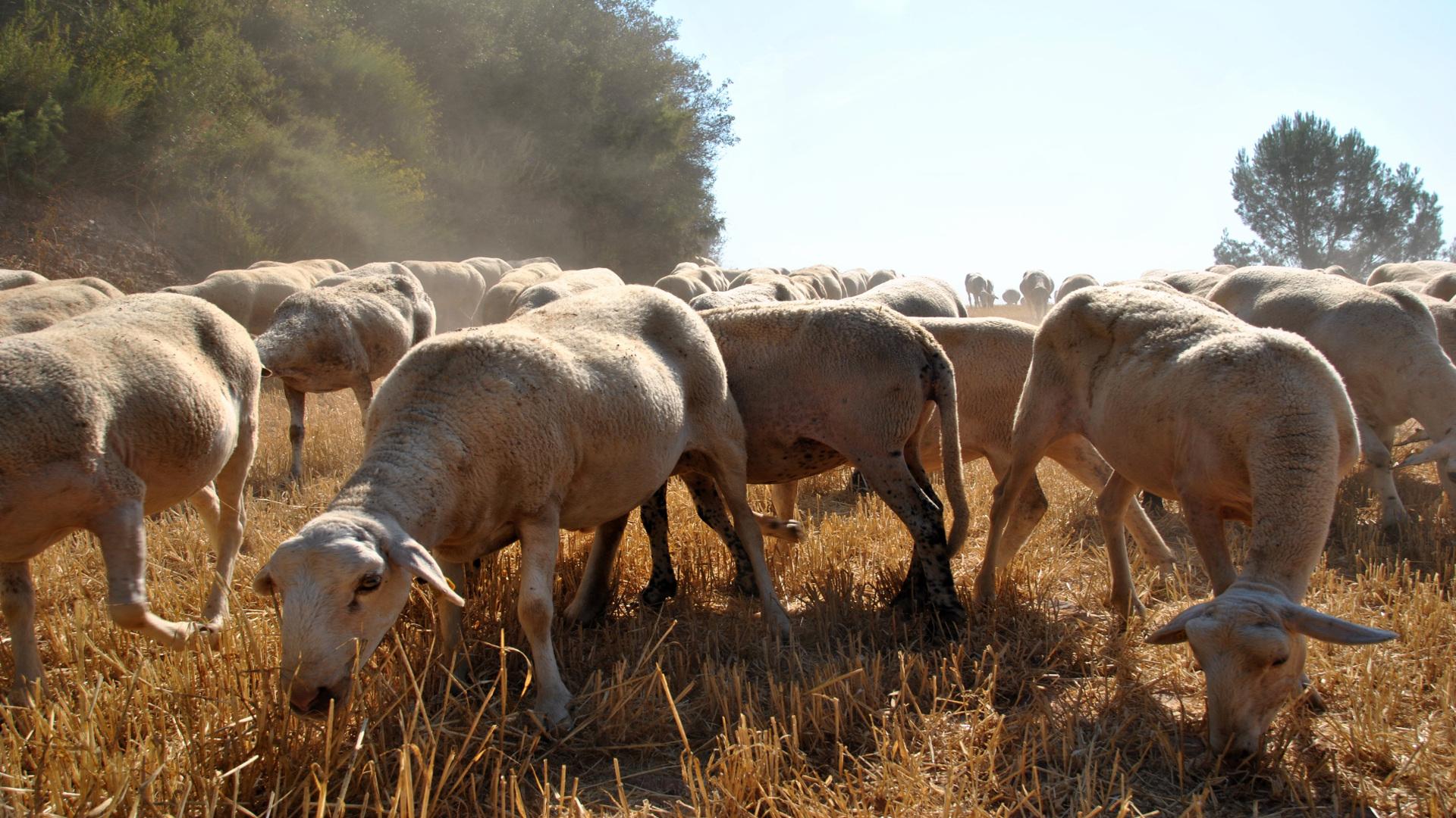 Decalogo de los pastores para la prevencion de los incendios forestales.1920