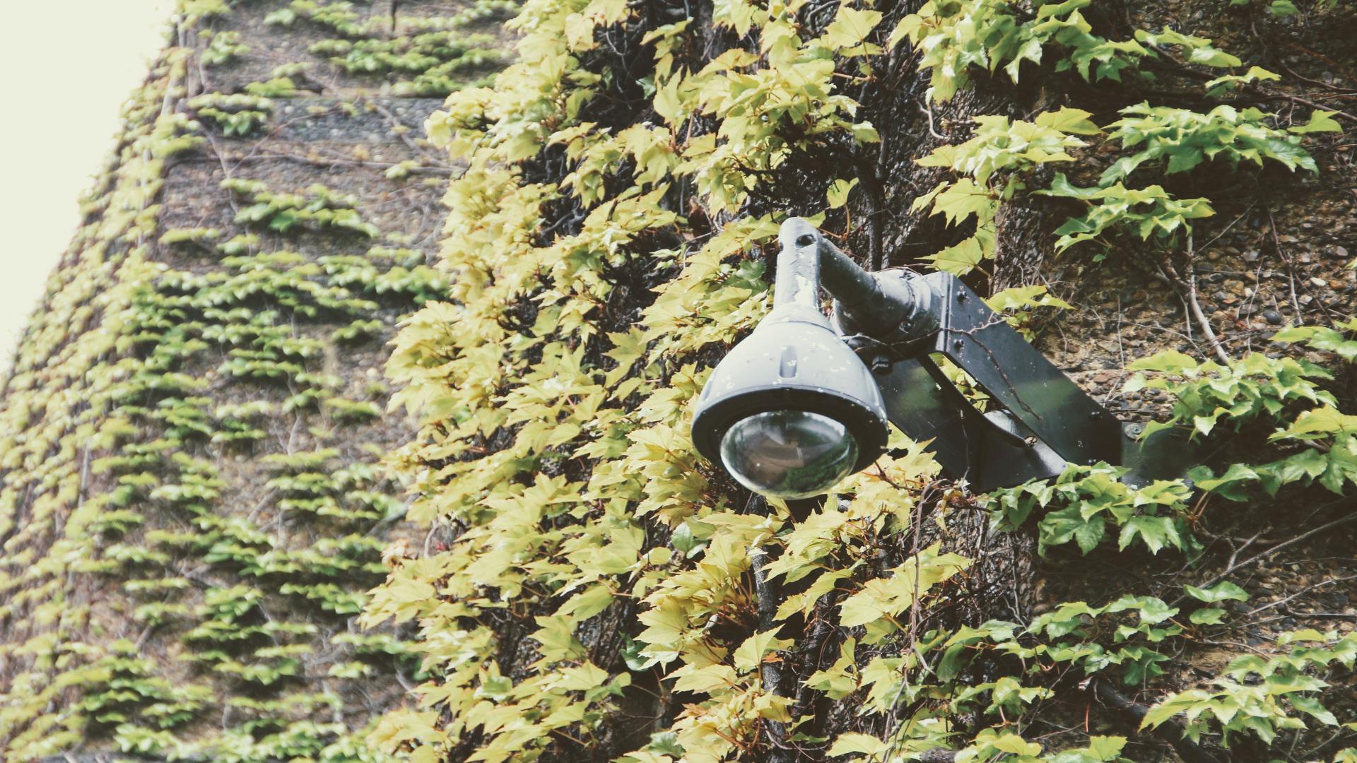 88 cámaras vigilaran el territorio gallego para prevenir incendios forestales.1920