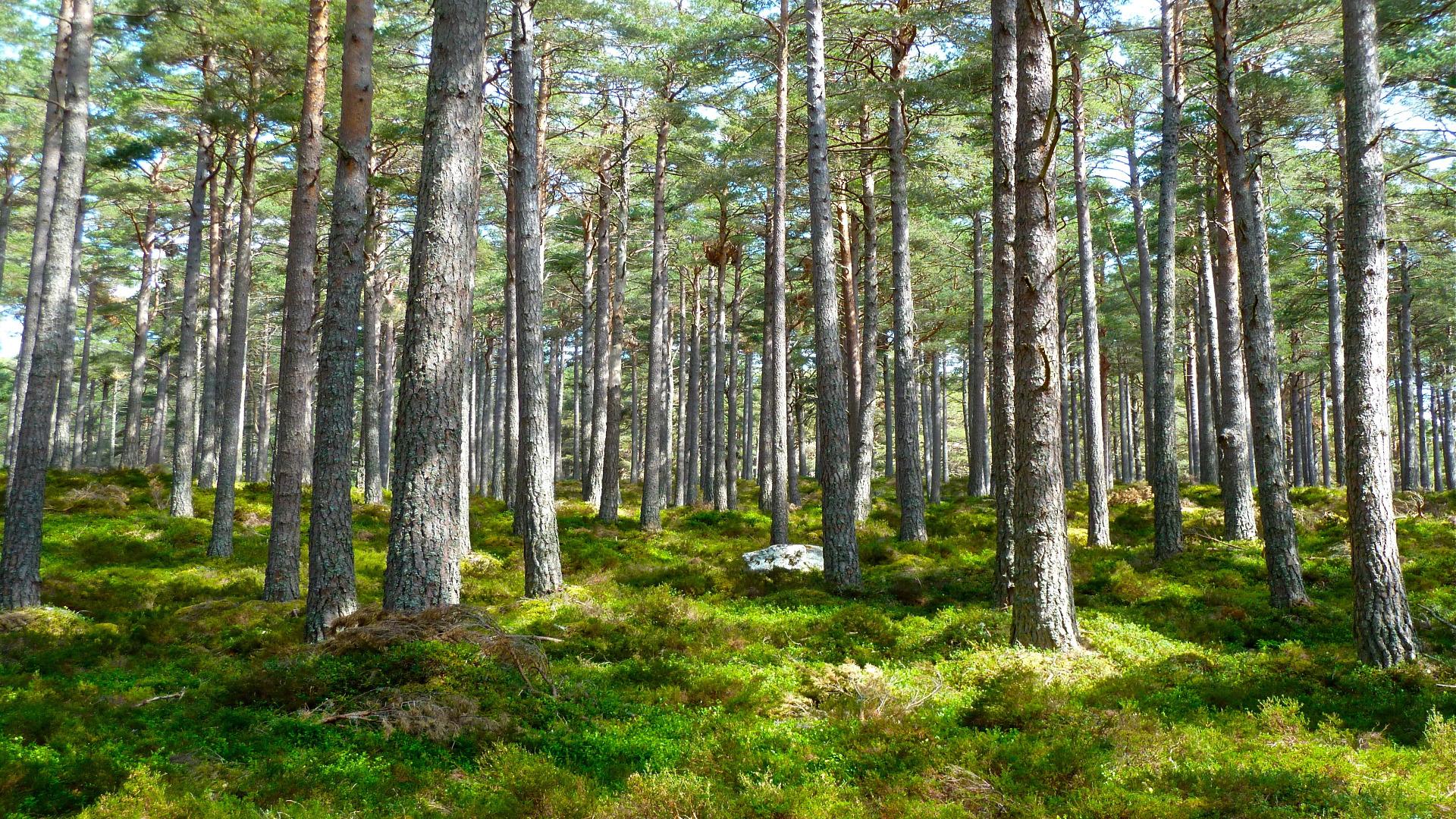 Bases del II premio al Proyecto Innovador Forestal 2018 1920