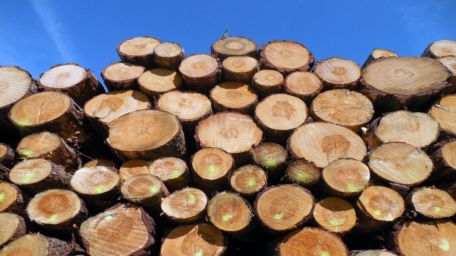 La Xunta permitira cortar pinos y eucaliptos sin necesidad de permiso1920