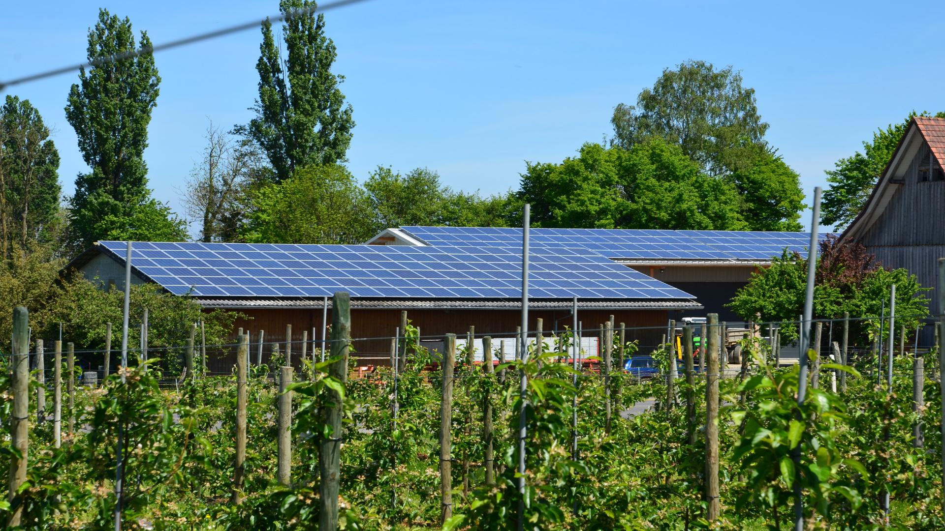 Instalar energías renovables en las explotaciones ganaderas 1920