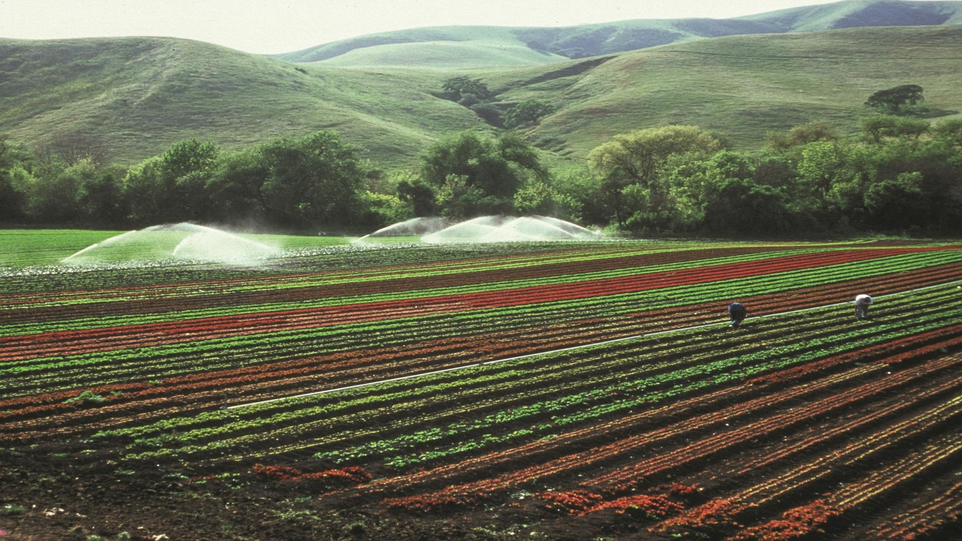Seria posible una agricultura sin agua1920