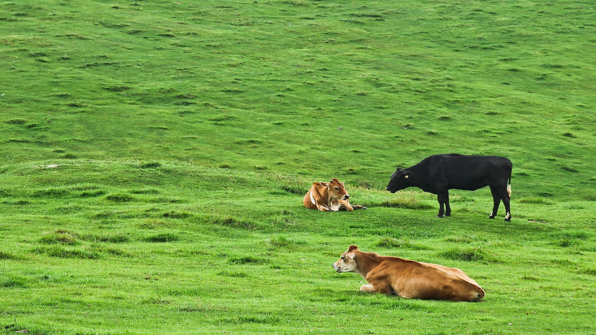 Desde el 5 de noviembre está abierto el plazo para solicitar las subvenciones por el sacrificio obligatorio de animales.1920