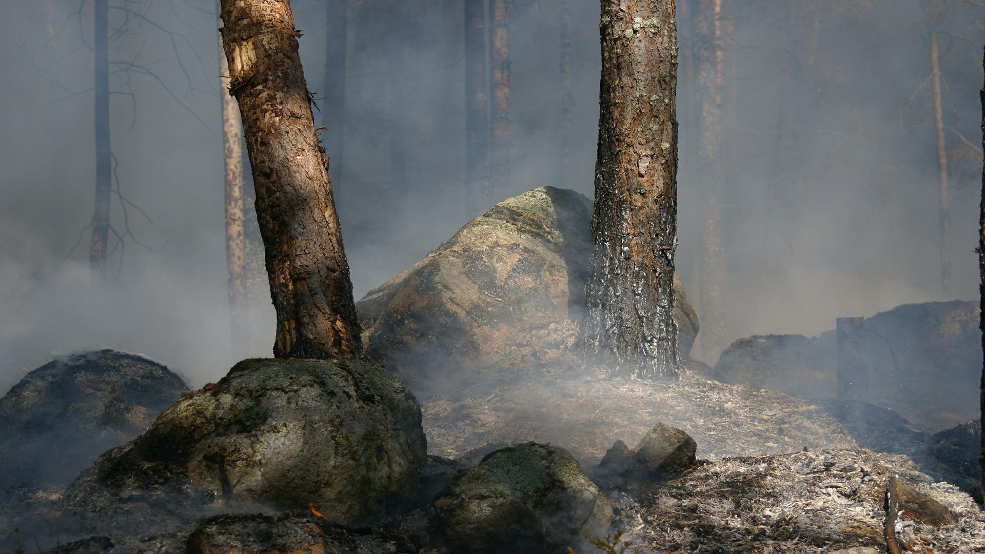 14-5 millones de euros para restaurar zonas afectadas por incendios 1920