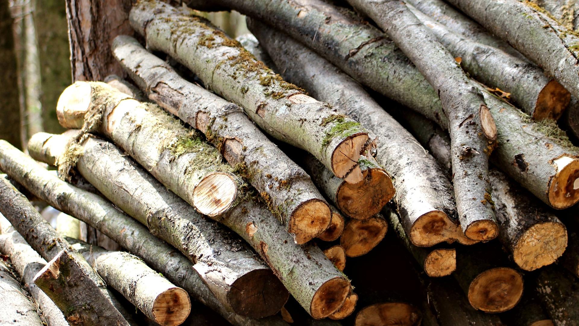 Ayudas para la industria forestal1920