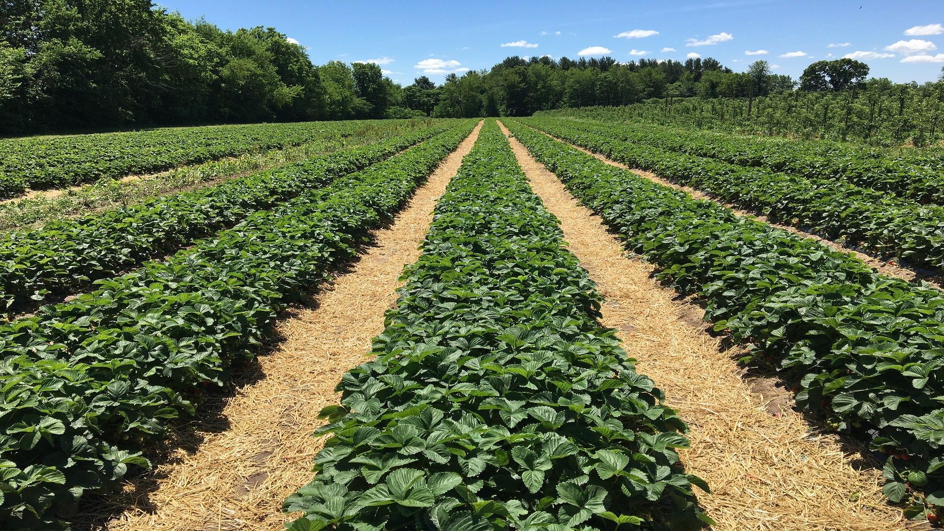 La ganaderia, la agricultura y el sector forestal son actividades esenciales1920