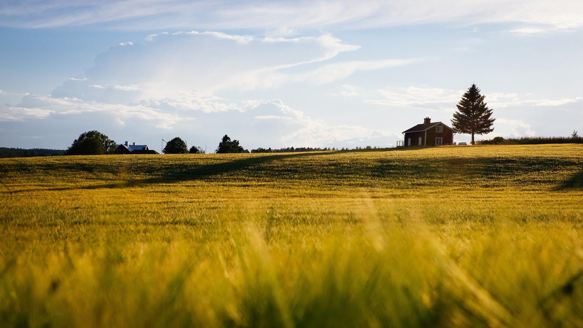 La posibilidad de contar con superficie agraria suficiente determina la instalación de nuevas iniciativas en el rural1920