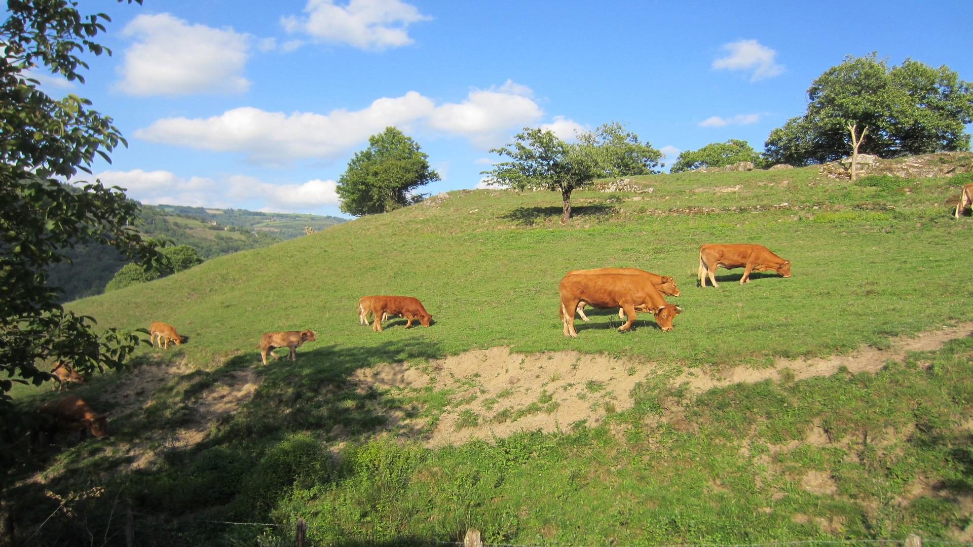 Hasta 7.000 euros por cada productor y 50.000 por pyme para reactivar el campo gallego1920