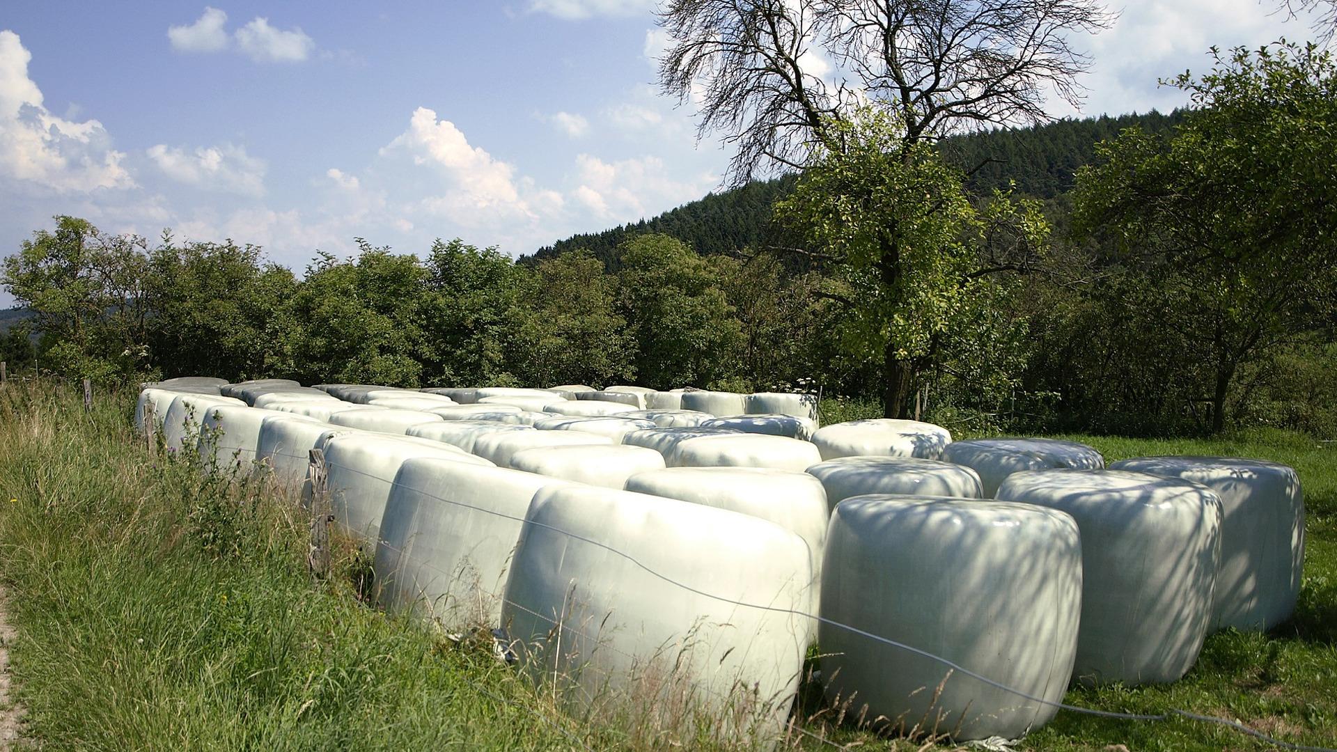 Buenas practicas en el cultivo el ensilado y en el manejo de los silos para reducir la presencia de micotoxinas.1920