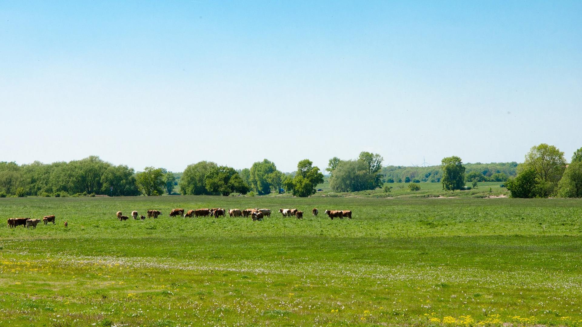 Las exigencias medioambientales de la PAC superadas con creces por los agricultores y ganaderos españoles1920