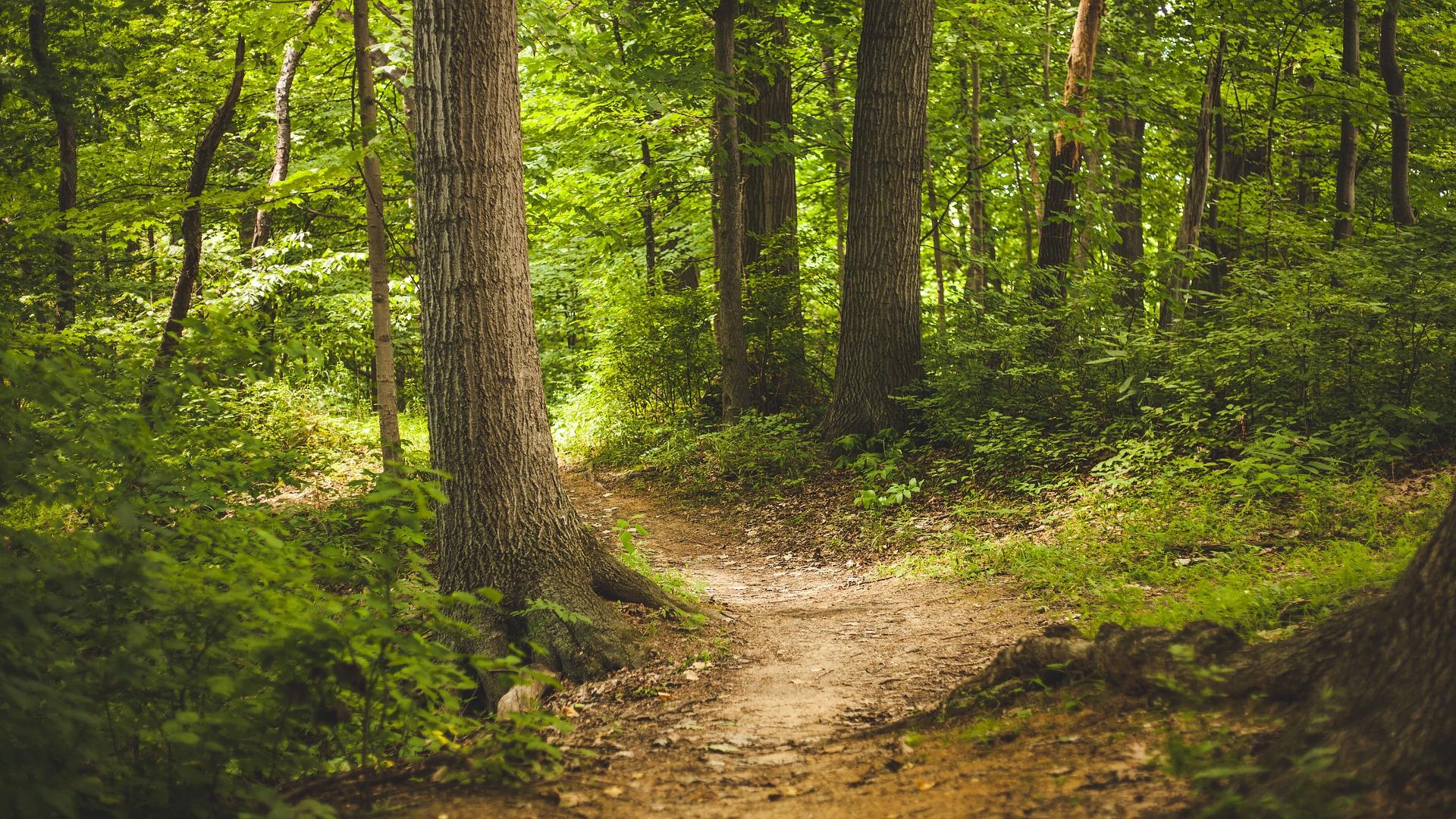 la-adhesioon-a-uno-de-los-modelos-forestales-que-creara-la-xunta-sera-obligatoria-a-partir-del-31-de-diciembre-del-2020
