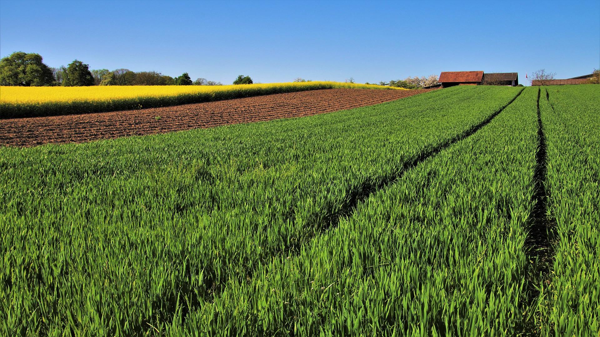 adaptarse-al-decreto-sobre-fertilizacion-de-suelos-no-le-resultara-sencillo-al-campo-gallego-1920